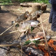 bushcraft forel